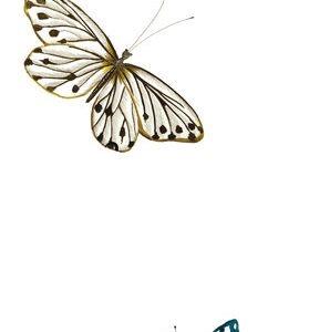 Тишлайфер Пеперуди